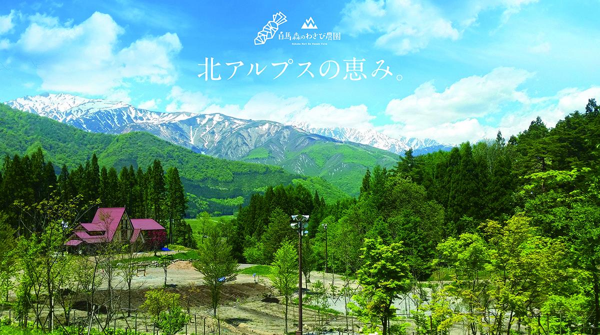 長野県白馬村にある陸わさびを生産している農園『白馬森のわさび農園』。