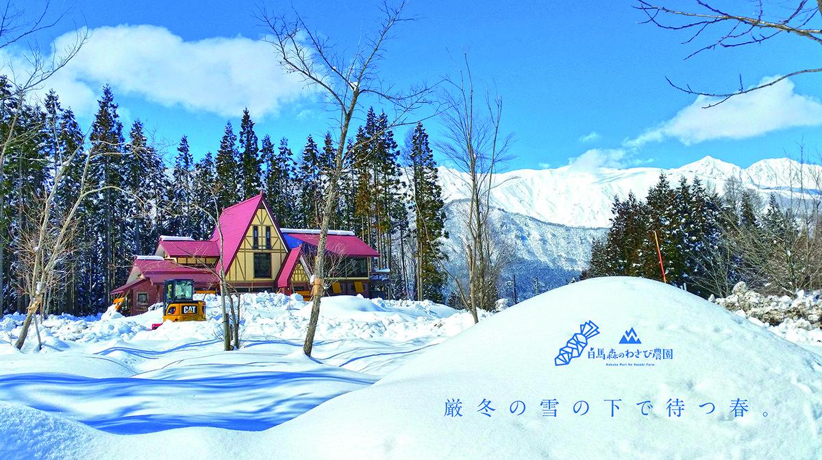 多くの自然に囲まれた白馬村は、昼はその雄大な『景色』、夜は満天の『星空』が皆様をお待ちしております。